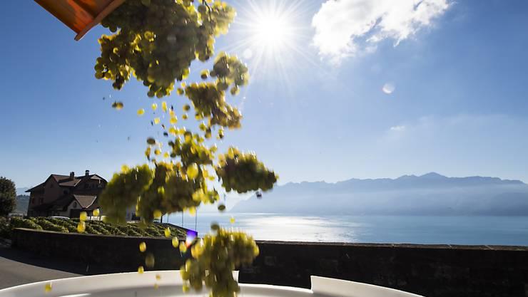 Beim Grossen Preis des Schweizer Weins wurde in diesem Jahr ein Weingut aus der Waadt ausgezeichnet (Archivbild).