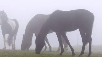 In der Türkei mussten wegen einer Infektionskrankheit über 80 Pferde getötet werden. (Symbolbild)