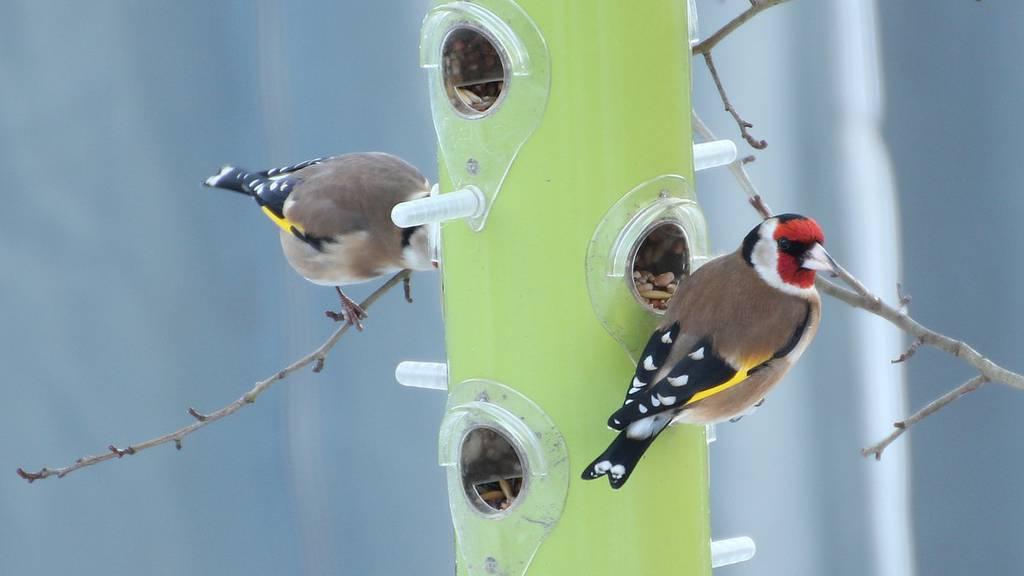 Mach mit bei der grossen Zentralschweizer Vogel-Zählung!