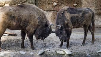 Der Tierpark Lange Erlen in Basel soll für die Jahre 2021 bis 2024 vom Kanton eine finanzielle Unterstützung erhalten.