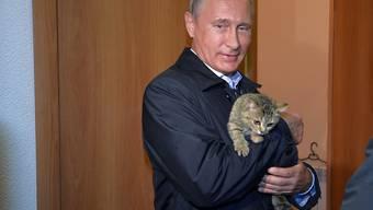 Posieren mit Katze: Was dem Präsidenten recht ist, ist den russisch-orthodoxen Priestern billig. (Symbolbild)