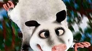 Das schielende Opossum Heidi.  ho