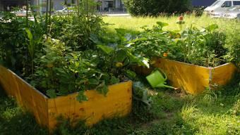 Die Basler Regierung ist skeptisch gegenüber «Urban Farming». (Symbolbild)