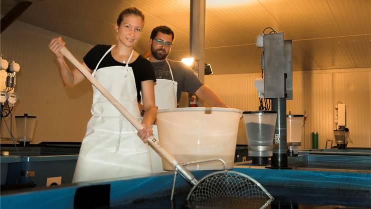 Judith Häseli und Simon Bachofer bewirtschaften eine Zanderzuchtanlage mit derzeit 7000 Fischen. ZVG