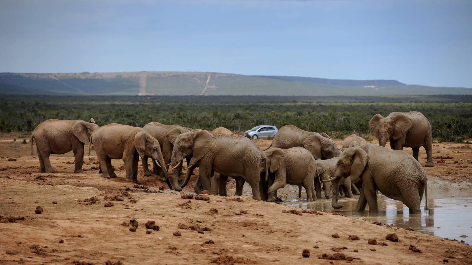 Safari 36 Grad Südafrika (© Zur Verfügung gestellt)