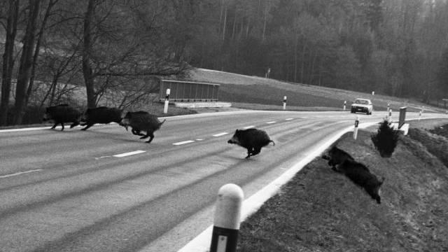 """Todesmutig: """"Schwarzröcke"""" überqueren eine Strasse (Archiv)"""