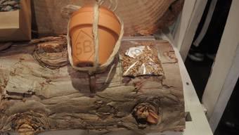 Die Starter-Kits mit Topf, Erde, Samen und Pflanzanleitung stossen nicht nur bei den Badenern auf grosses Interesse.