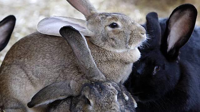 In der Gruppe gehts den Kaninchen besser