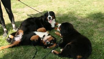 Die Hundekäufer haben vergessen, ihren Welpen am Zoll anzumelden. (Symbolbild)