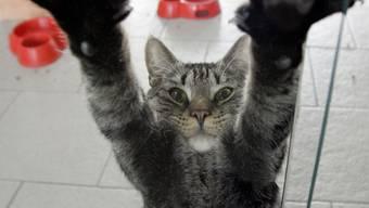 Wegen des warmen Wetters haben viele Katzen auf der Suche nach einem kühlen Platz das Weite gesucht. (Archivbild)