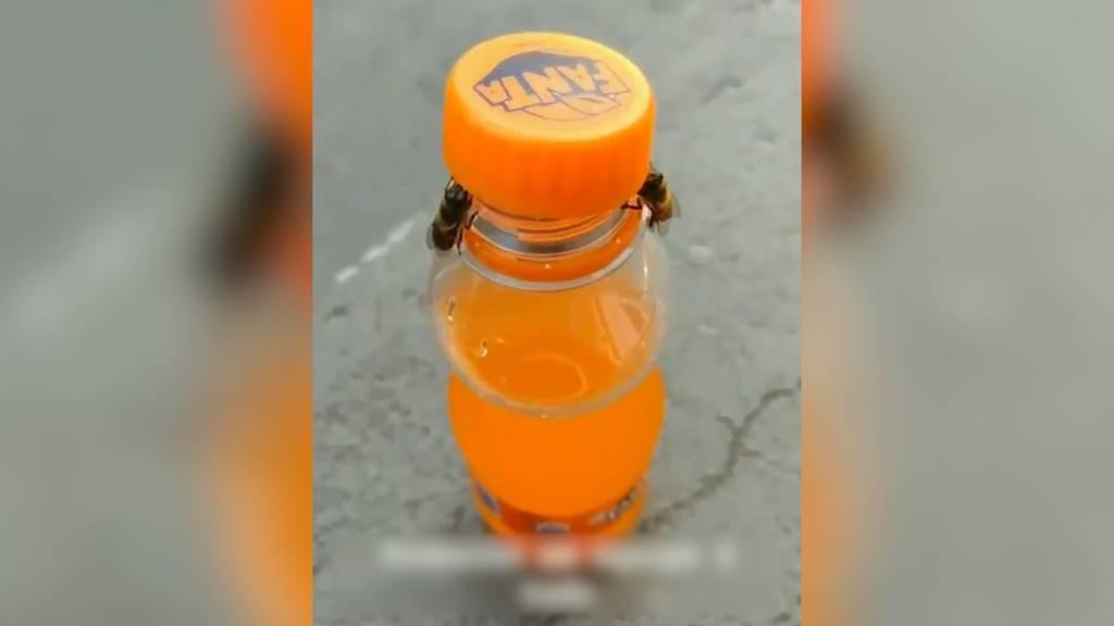Diese Bienen meistern den Drehverschluss