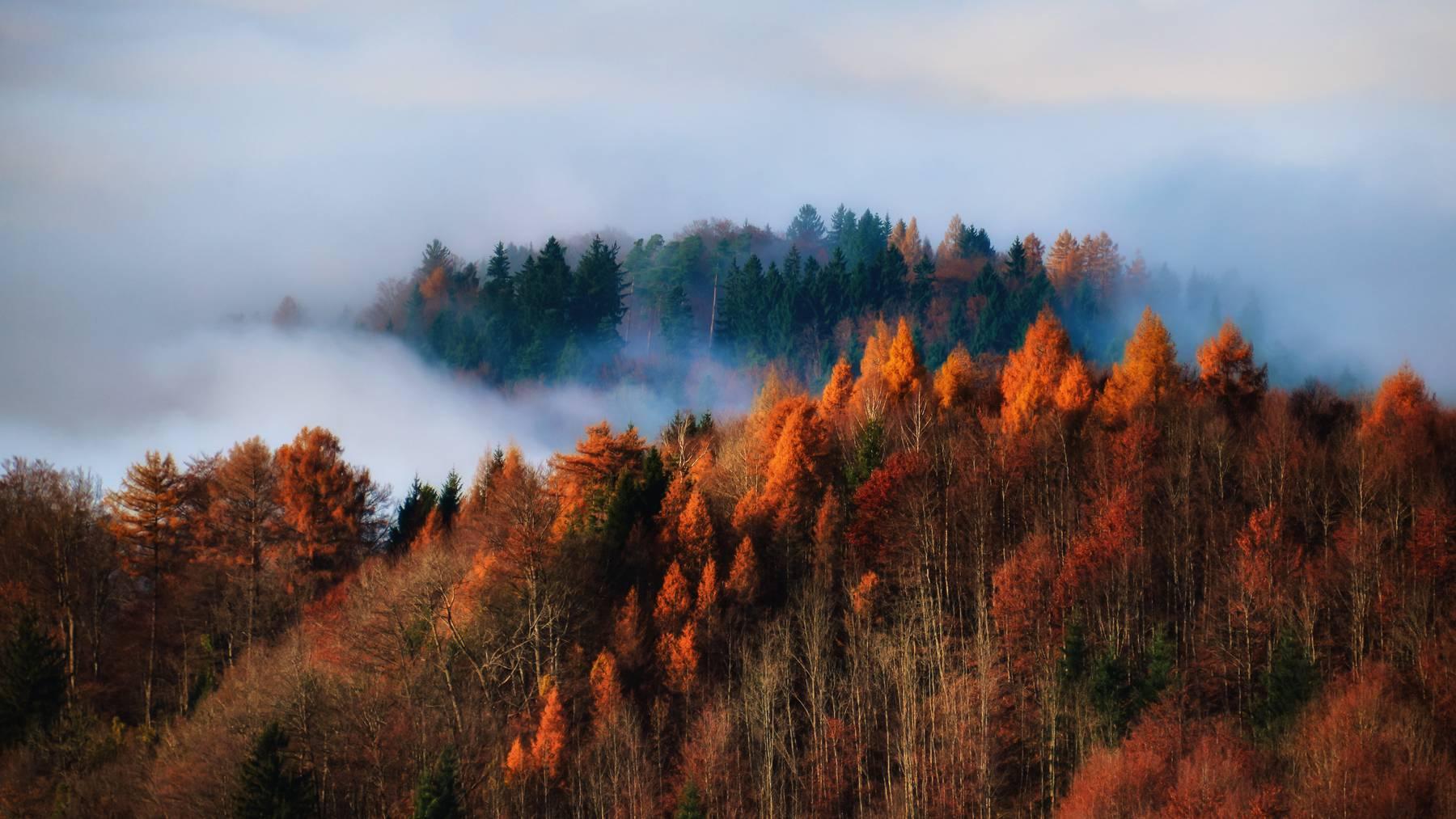Herbst Schweiz