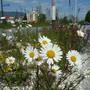 Solothurn hat die Biodiversität im Kanton Solothurn erhöht.