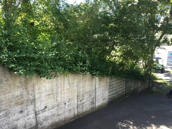 Beton, Grün und Zäune: Der Vorplatz des Asylzentrums.