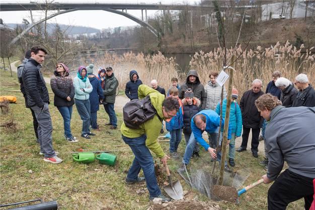 Baumpflanzaktion von der Natur- und Heimatschutzkommission Obersiggenthal am Kappisee. Bauer Christian Schärer zeigte den Paten, wie man den Baum «bibersicher» pflanzen kann.