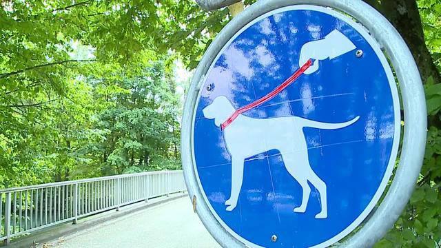 Hunde-Leinenpflicht an der Limmat