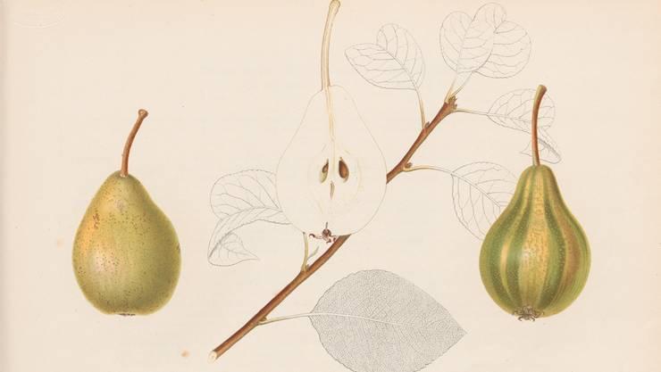 Schweizer lieben Birnen – und diese haben nicht nur kulinarisch, sondern hie und da auch optisch etwas zu bieten, etwa die Schweizerhose (Farbendruck aus dem Jahr 1863).
