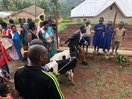 Viehabgaben – hier von Milchgeissen – sind eine grosse Hilfe für notleidende Familien.