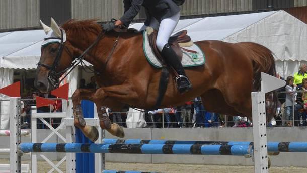 Bei einem Sprung fiel die Reiterin vom Pferd. (Symbolbild)