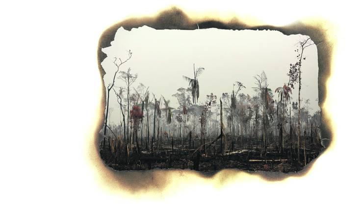 Tausende von riesigen Feuern zerstören den Regenwald im Amazonasgebiet, so beispielsweise im brasilianischen Boca do Acre.
