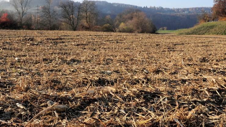Die Trockenheit stört die Vegetation kaum, da diese derzeit sowieso Winterschlaf hält: Feld bei Bubendorf.  Kn