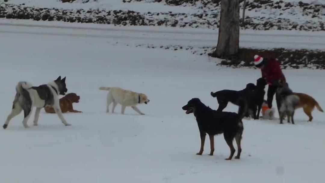 Hundeschule Berghof macht im März 2019 einen Ausflug auf den Weissenstein