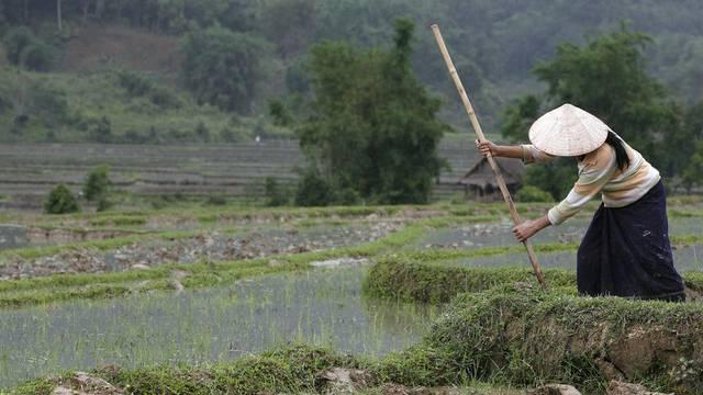 Eine Bäuerin bei der Arbeit auf einem Reisfeld in Laos (Symbolbild)