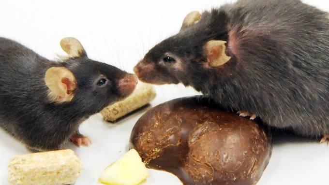 Das Zusammenspiel von Kälte und Vitamin A kann helfen, schlechtes weisses Körperfett in gutes braunes umzuwandeln, was schliesslich der Gewichtsreduktion dient. Die Methode wirkte im Labor bei Mäusen und Menschen. (Symbolbild)