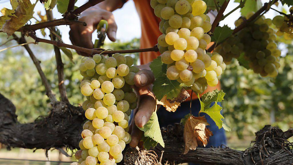 China leitet Antidumpinguntersuchung zu australischem Wein ein