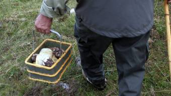 Ein Pilzsammler ging im Wald verloren. (Symbolbild)