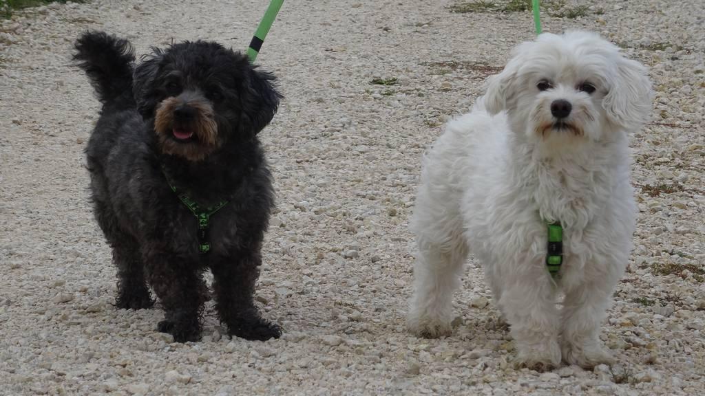 Kiki und Bubi