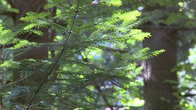 Besser zum Wald schauen