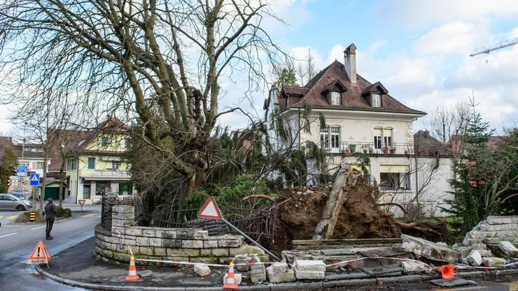 In Laufen an der Röschenzerstrasse fiel ein grosser Baum genau neben ein Haus. Dabei beschädigten die Wurzeln das angrenzende Trottoir und die Mauer des Grundstücks