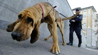Ein Polizeihund nahm erfolgreich die Fährte des zweiten Täters auf und spürte ihn an der Oensingerstrasse, versteckt in einem Gartenhaus, auf. (Symbolbild)