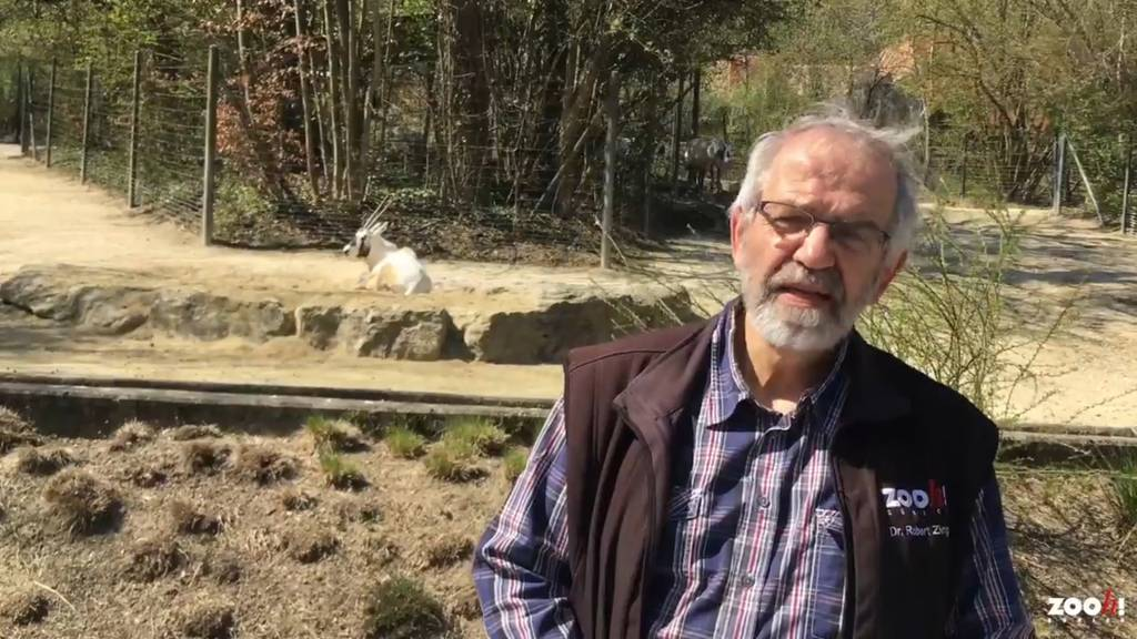 Der Chefkurator des Züri-Zoos geht in Pension – wusstest du eigentlich, was er sich als Haustier hält?
