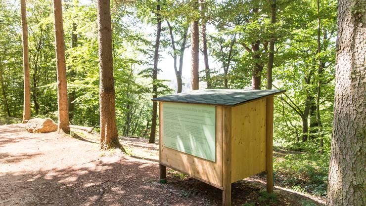 """AZ Sommerserie: """"Der Aargau unterirdisch"""" in der Bruderhöhle in Effingen. (26. Juli 2018)"""