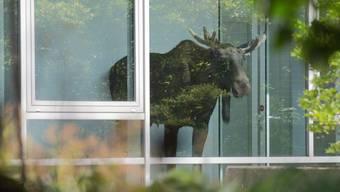 Junger Elch verirrt sich in Dresden in ein Bürohaus