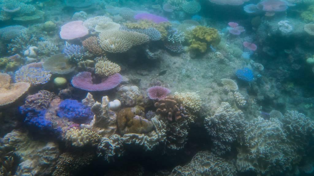 Die Meere schwitzen immer häufiger