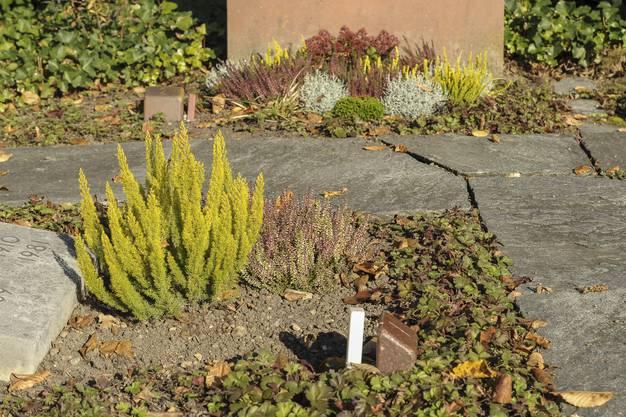 Der kleine weisse Pflock bedeutet: Dieses Grab wird von der Stadtgärtnerei gepflegt, nicht von den Angehörigen.