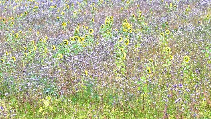 Monet in Dürrenäsch