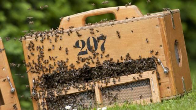 Die EU will Bienen schützen