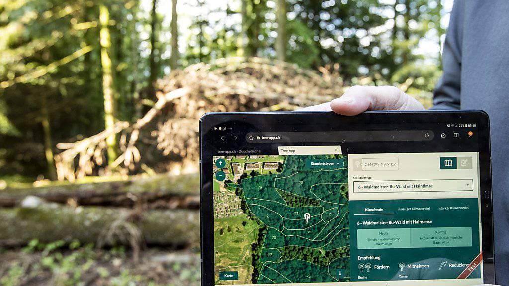 Eine neue App für Forstfachleute zeigt, welche Bäume im Wald auch bei veränderten klimatischen Bedingungen eine Zukunft haben.