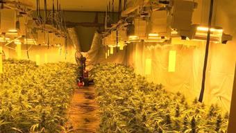 Die Indoor-Hanfplantage in Unterengstringen wurde professionell betrieben.
