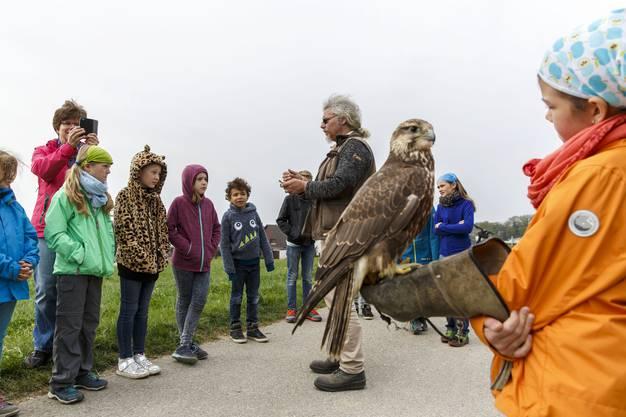 Falkner Ulrich Lüthi erklärt den Kindern den Umgang mit Greifvögeln