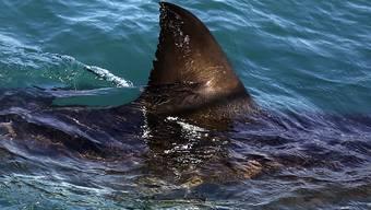 Flosse eines Haifischs. (Archivbild)