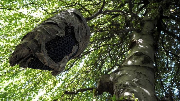 Leif Bennett zeigt «Die Wespe ist unschuldig!» im Botanischen Garten.