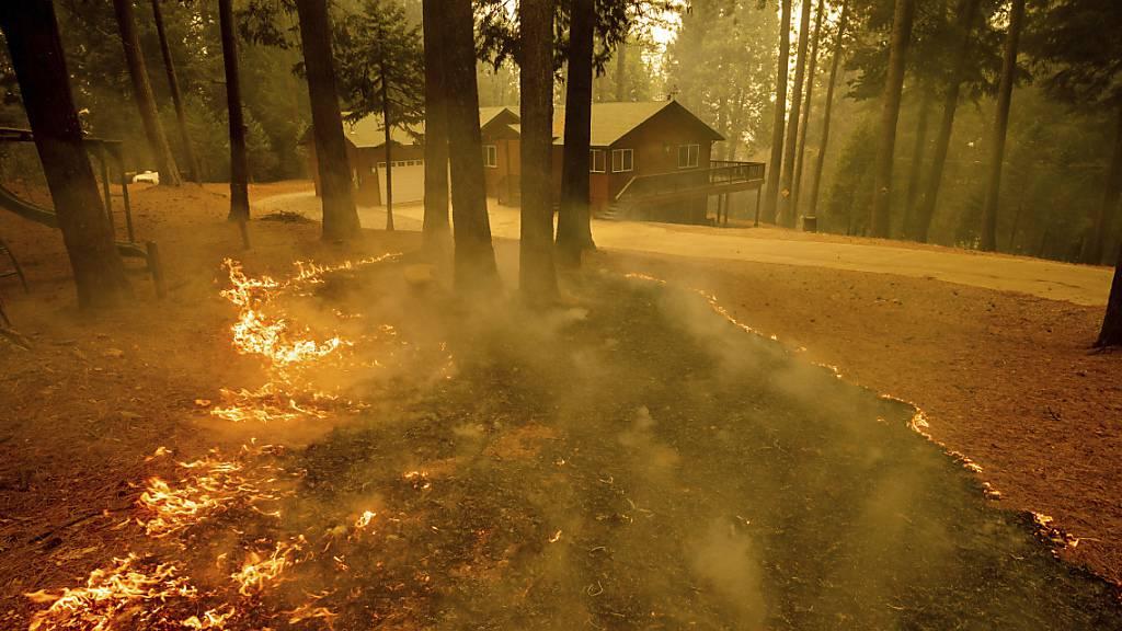 Flammen eines Waldbrandes lodern in einem Waldstück im kalifornischen Grizzly Flats. In Kalifornien kämpfen mehr als 10 000 Feuerwehrleute gegen die Brände an. Das sogenannte Caldor-Feuer ist nach Angaben der Feuerwehr am Mittwoch (Ortszeit) innerhalb von 24 Stunden fast ums Zehnfache angewachsen. Foto: Ethan Swope/FR171736 AP/dpa