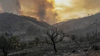 Nur noch Asche: In Portugal sind Dutzende Hektaren Wald abgebrannt.