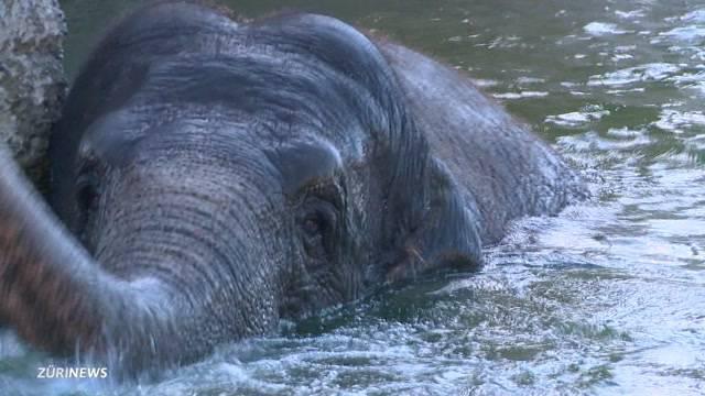 Kinderzoo Rapperswil eröffnet neuen Elefanten-Park