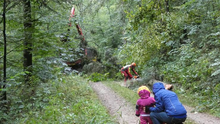 Waldbereisung Elfingen